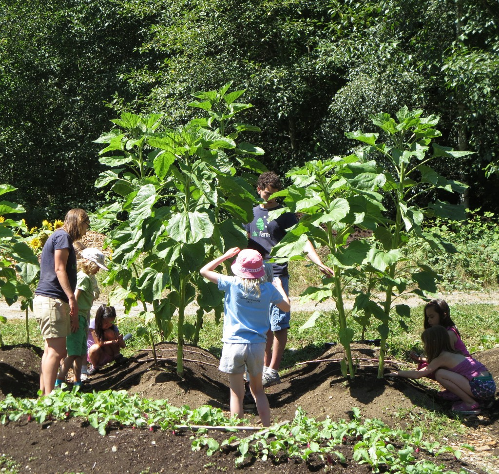 UBC Farm Child Program